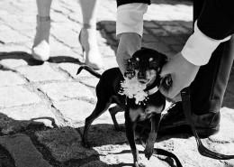 Romeo fragt Julia 08 - Fotograf Hochzeit Berlin